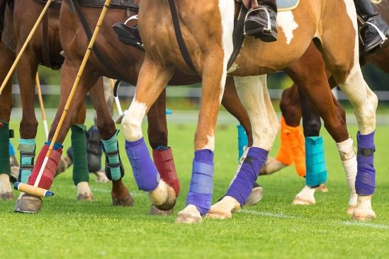 Leg Gear Protection for Horses