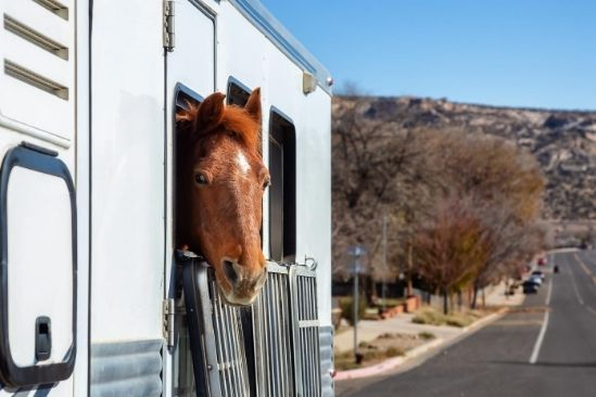 What You Need to Consider Before Buying a Horse Trailer
