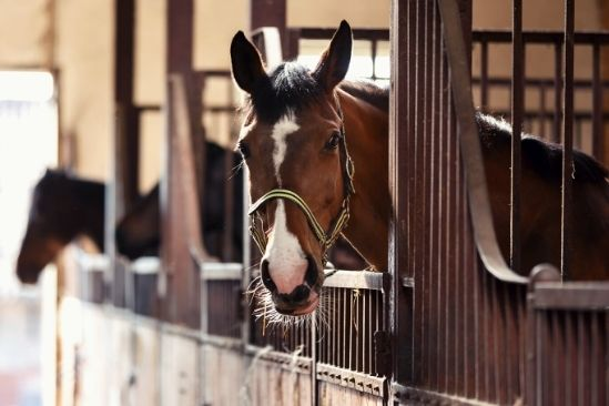 An Essential List of Horse Supplies and Equipment