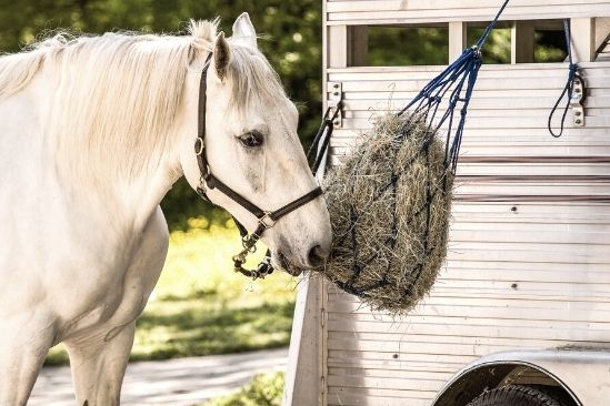 Tips To Get Your Horse in a Trailer Successfully