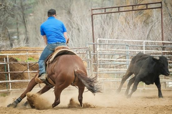 The Difference Between Cutting and Roping Saddles