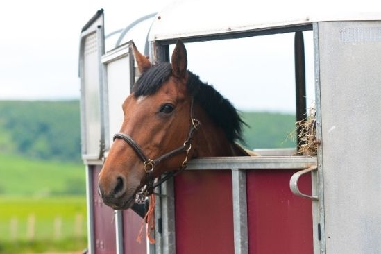 How To Teach Your Horse To Safely Back Out of a Trailer